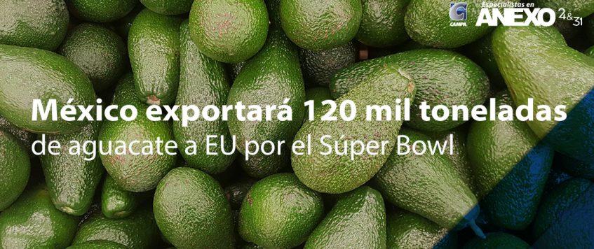 México exportará 120 mil toneladas de aguacate a EU por el Súper Bowl